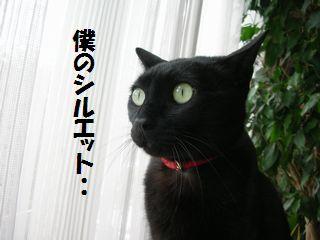 jiji3.jpg