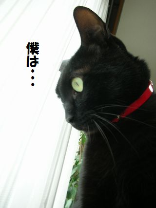 jiji7.jpg