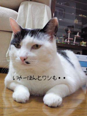 washimo.jpg
