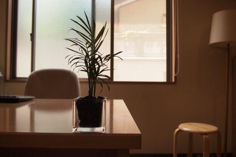 テーブルヤシ (C)表参道・青山・原宿・外苑前・渋谷・東京都内のはりきゅう院源保堂鍼灸院 肩こり・腰痛・生理痛・頭痛など