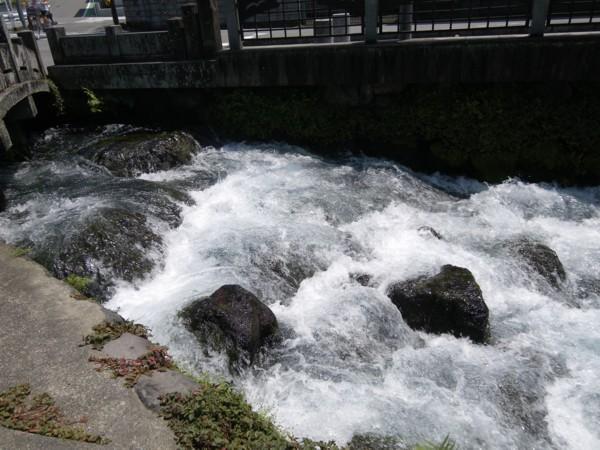 富士の湧水3