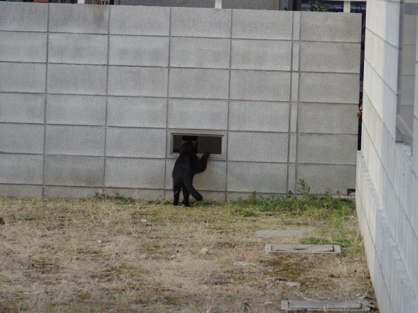 猫11,12