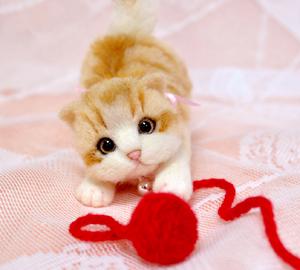 ミニ白茶トラ子猫130724 008