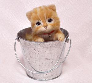 茶トラ猫130921 063