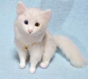 オッドアイ白猫-1301001 075