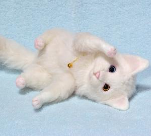 オッドアイ白猫-1301001 046