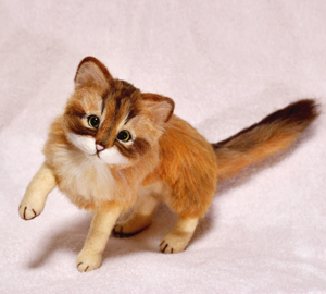 ソマリ猫131029 001