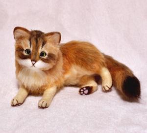 ソマリ猫131029 005