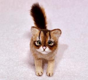 ソマリ猫 014