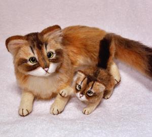 ソマリ猫 017