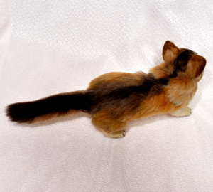 ソマリ親子猫1311020042