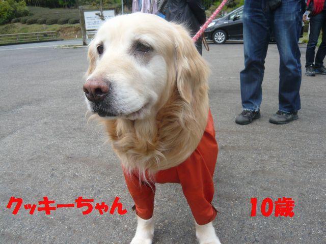 P1040709ぶ
