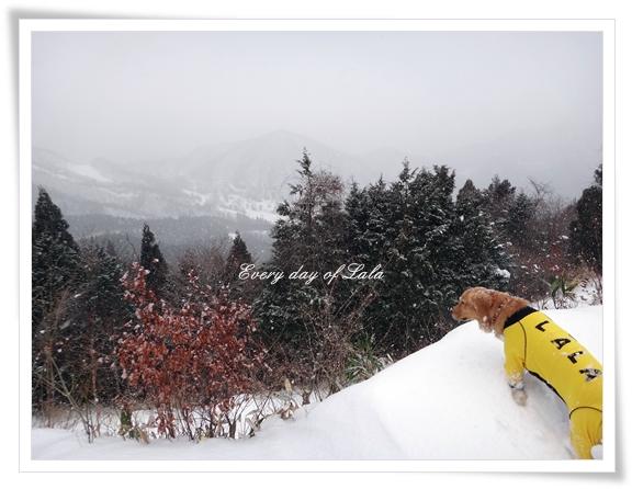 雪ふる201401