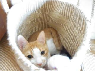 7昼寝猫4