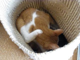 7昼寝猫3