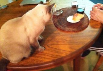 10猫晩酌2