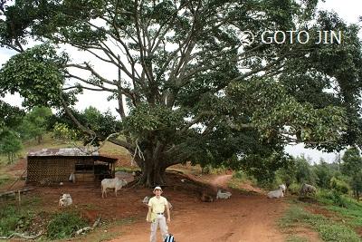 ミャンマー旅行20