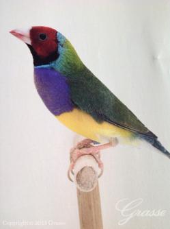 201306_bird03-2.jpg