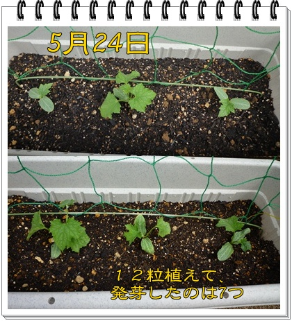 P1060359-vert.jpg