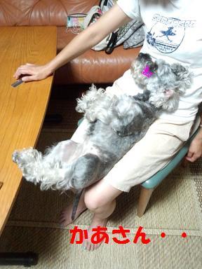 2012 ブログ用 1023かあさん・・