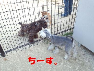 2012 ブログ用 1028あめこか