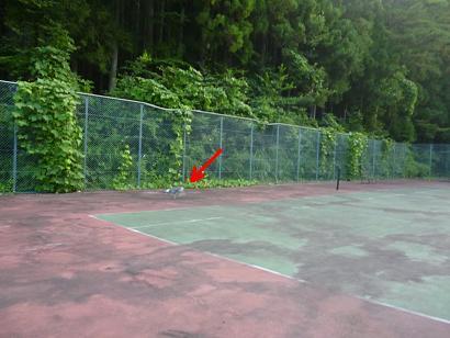 テニスコート走る