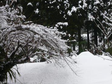 雪260119