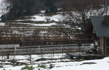 小屋260130朝雪あり