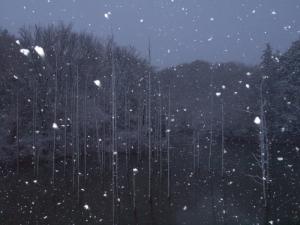 新春の積雪(3)