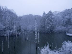 新春の積雪(2)