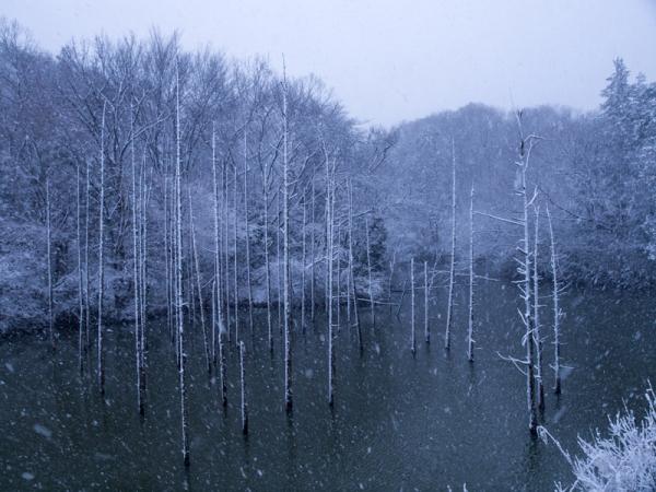新春の積雪(1)