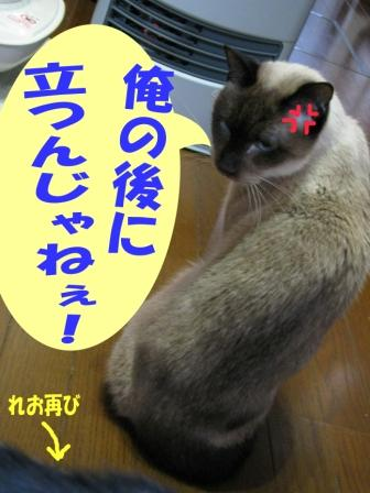 cats2014 011