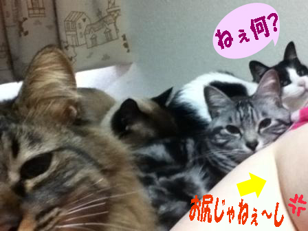 cats2014 016