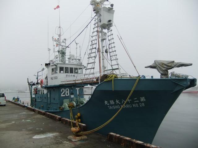 クジラ 004