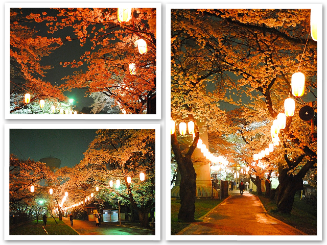 夜桜☆羽村の堰