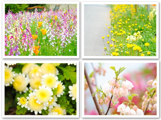 芝桜☆館林
