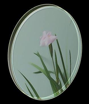 ピンク野花菖蒲①