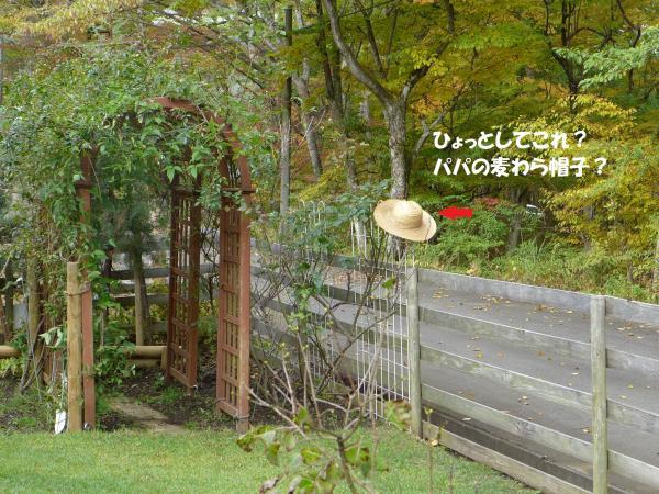 313_convert_20141026150132.jpg
