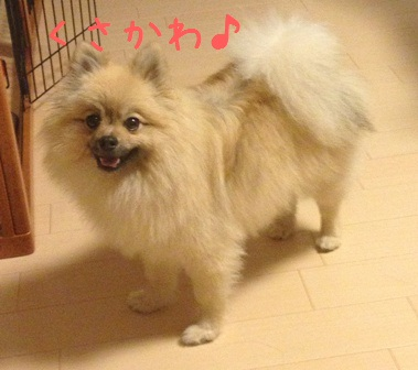 006_20130531202807.jpg