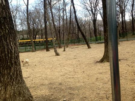 林の中のドッグラン