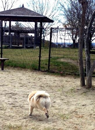 飛行犬 (2)