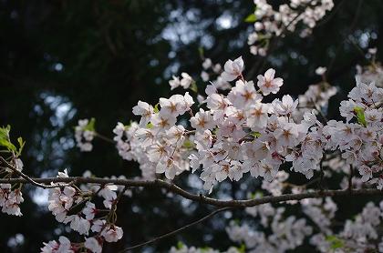 花がきれい
