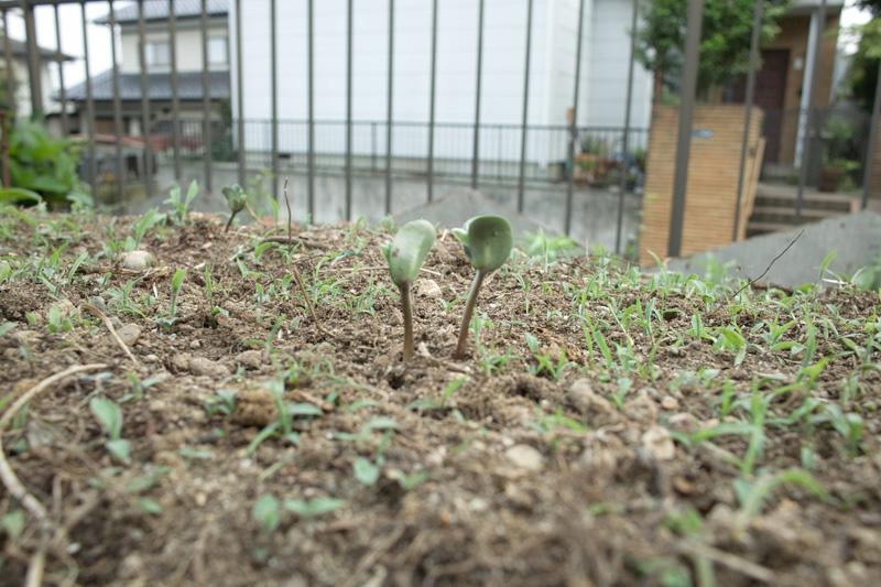 畑のポートレート 01