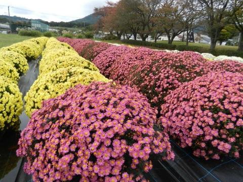DSCN0019 戸川公園