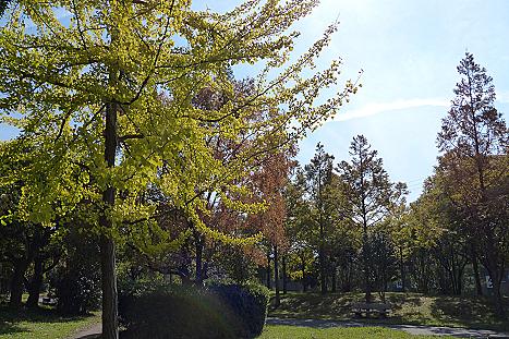 紅葉の並木道♪