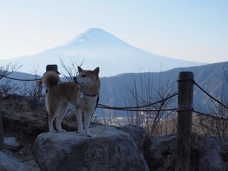 やっぱ富士山