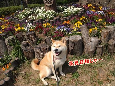 花見たのし~