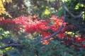 秋の風景5