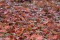 秋の風景12