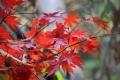 秋の風景7